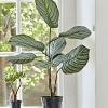Faux Potted Calathea Plant
