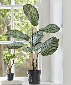 Faux Potted Calathea Plant